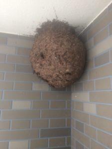 厚木市の蜂駆除例写真