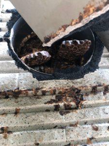 大和市の蜂駆除の写真