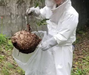 横浜市神奈川区でのスズメバチ蜂駆除の写真